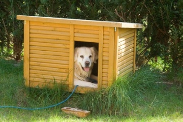 Golden Retriever lying in dog house