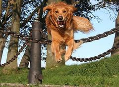 dog-containment-systems-invisible-dog-fence-electric-dog-fence-dog