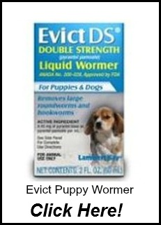 Evict Puppy Wormer