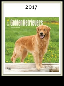 Golden Retriever Calendar