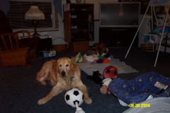 Golden Retriever dog memorial; picture of Mick
