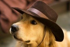 Golden Retriever wearing a cowboy hat